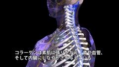 骨格と神経の病理病態CG