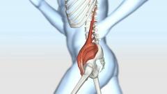 病理病態~腰の筋肉CG