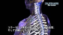 ヒトの骨格や神経などのCG作例