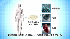 ヒトの組織を解説するCG画面の作例