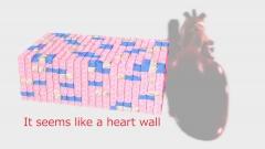 心筋のCG画像作例