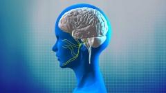 脳と神経CG作例