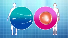 テレビ向けCG。人工授精の概念をCGで表現。