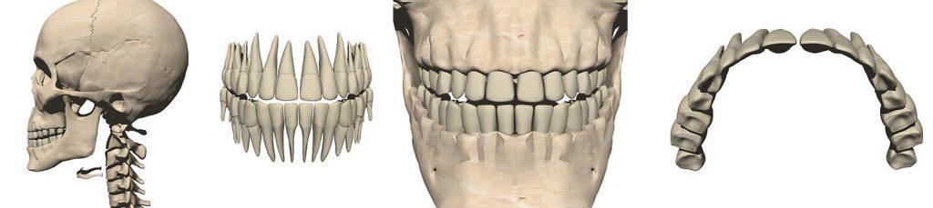 歯科のCG制作実例