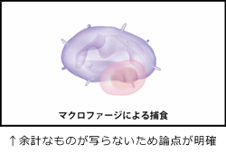 Flashアニメイメージ