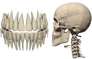 歯科CG映像制作イメージ